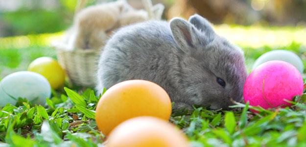 Święta Wielkanocne w górach od 999 zł/os.
